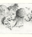 Dandelions in Dinefwr - Pencil on Paper - 6.5cm x 29cm - 2011