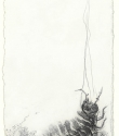 Woodlouse Study (iii) - Graphite and Pencil on Paper - 25.5cm x 14cm - 2010