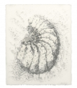 Woodlouse Study (i) - Graphite and Pencil on Paper - 19cm x 23cm - 2010
