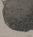 F44 - Graphite and Watercolour on Sandpaper - 14cm x 14cm - 2007